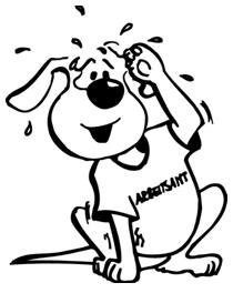 Arbeitsamt Für Hunde